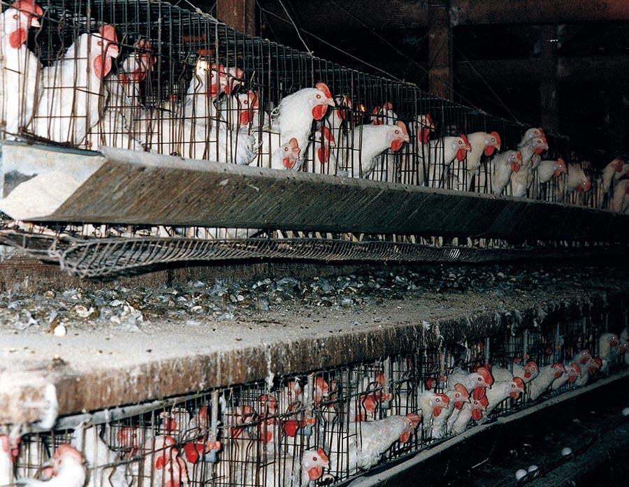 Hayvan Çiftlikleri 3