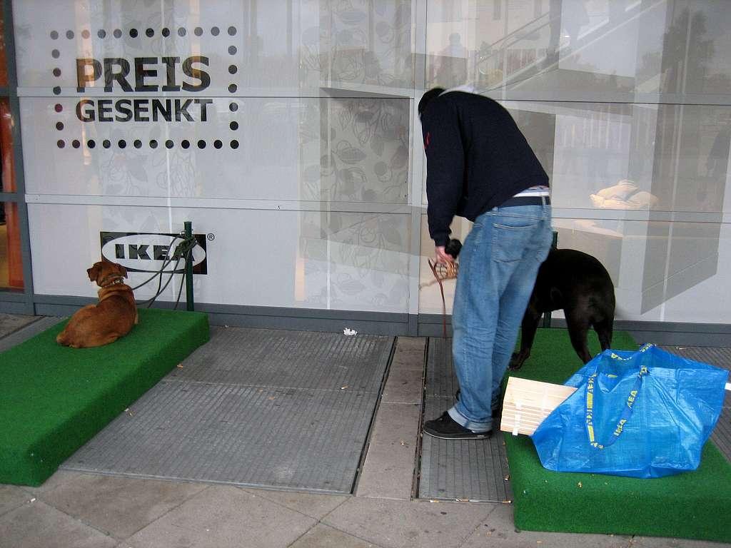 Ikea Köpek Parkı 1