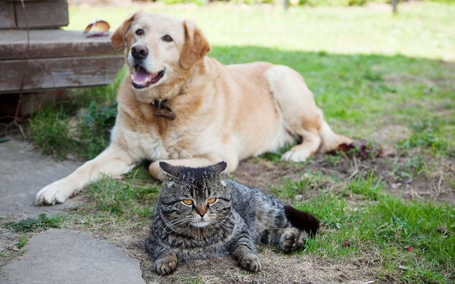 best friends relax in the garden