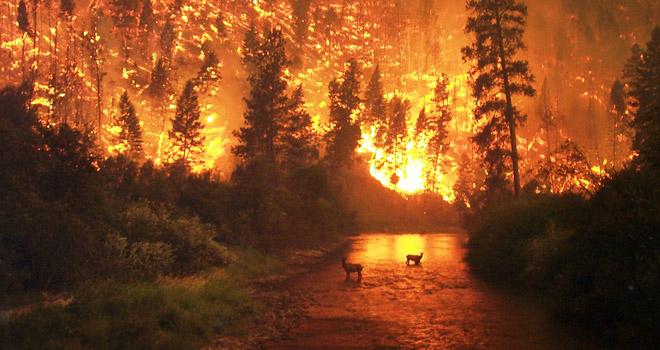 Orman Yangını 22