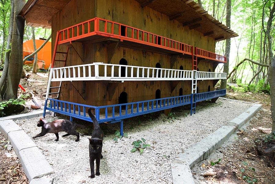 Macska apartman - Forrás: gaiadergi.com
