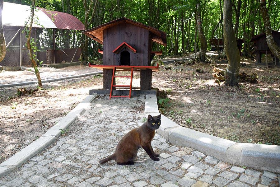 Samsun Kedi Kasabası 3