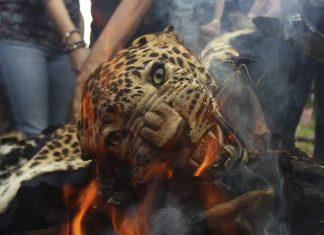 Lahey'de Uluslararası Hayvan Hakları Mahkemesi kuruluyor