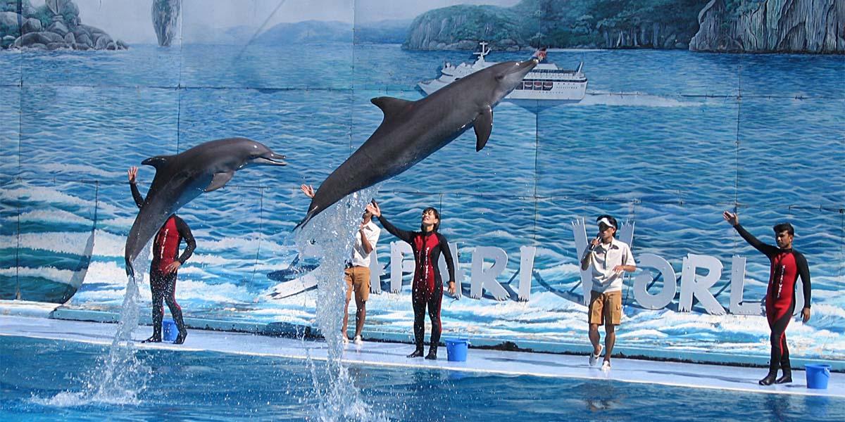 Tuzla Marina'daki yunus parkı projesine tepkiler büyüyor
