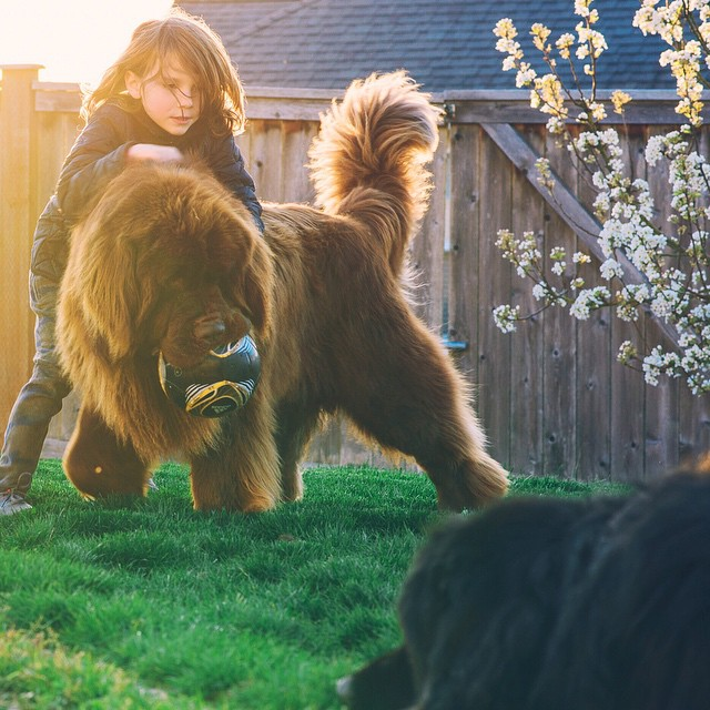 mom-photographs-son-dogs-horse-friendship-stasha-becker-julian-124