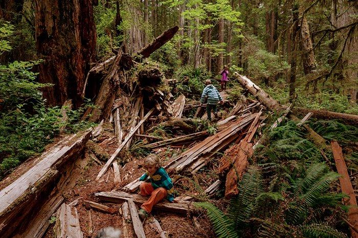 redwoods21