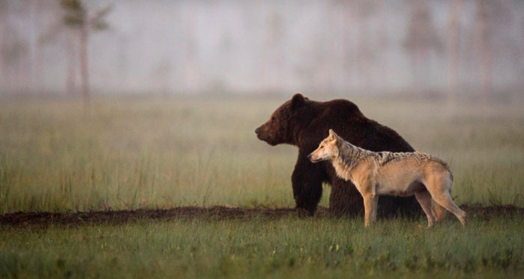 1_bear-and-a-wolf-best-friends