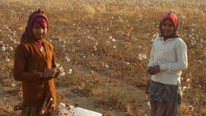 4. Pamuk tarlasında çocuk işçiler kaynak BBC