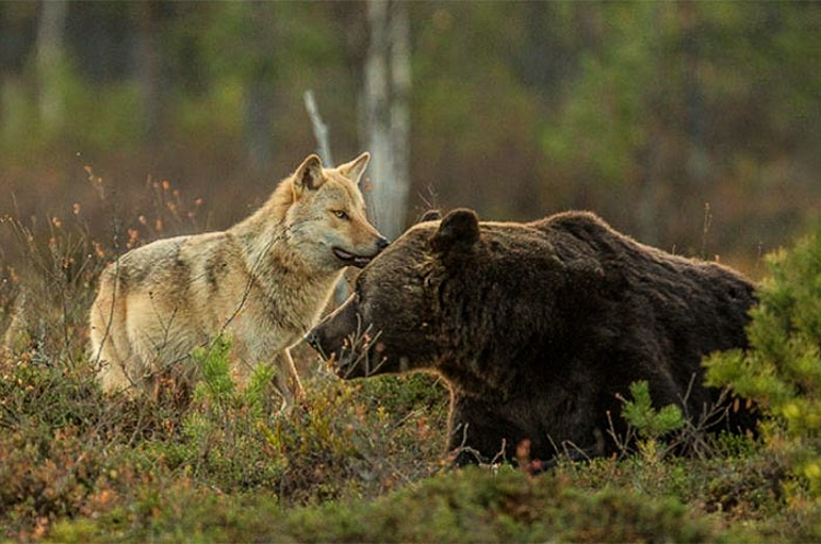 6_bear-and-a-wolf-best-friends