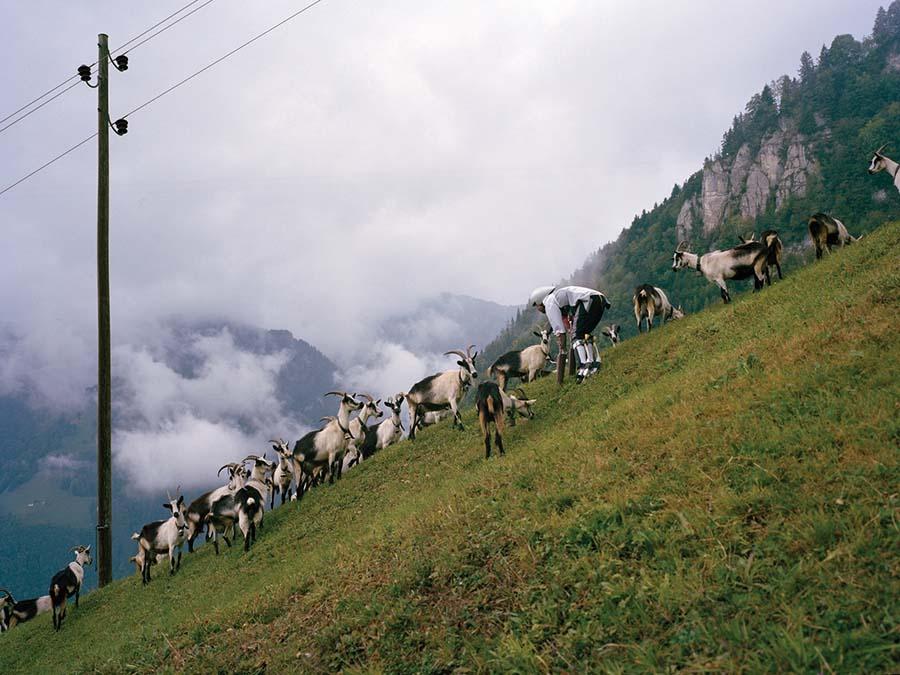 İsviçre Alpleri'nde 3 gün: Bir keçinin gözünden dünyaya bakmak
