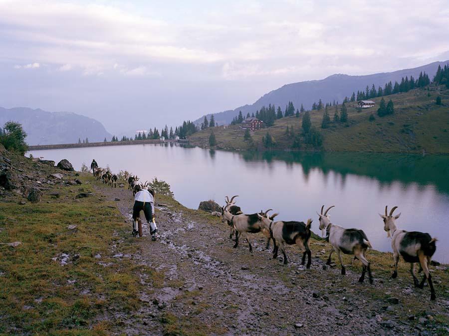 Bir keçinin gözünden dünyaya bakmak 8
