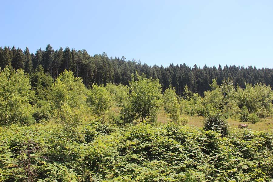 Cerattepe Ormanların devletten korunduğu yer 7