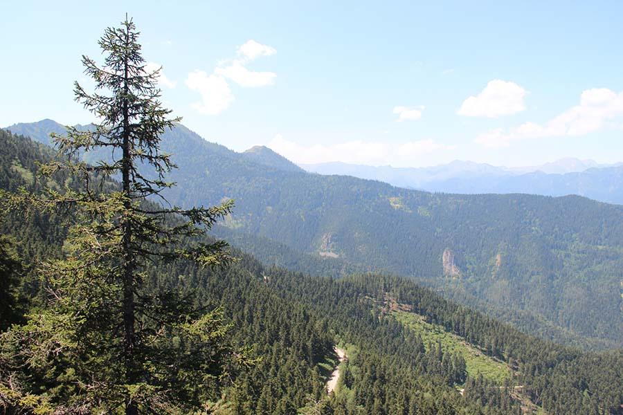 Cerattepe Ormanların devletten korunduğu yer Hatila Vadisi