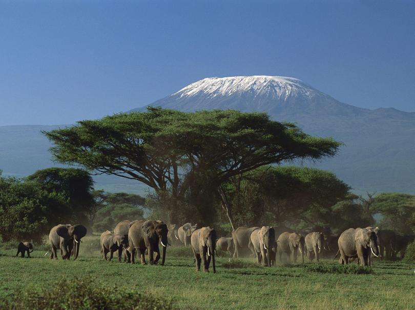 (Görsel: Mount Kenya Milli Parkı)