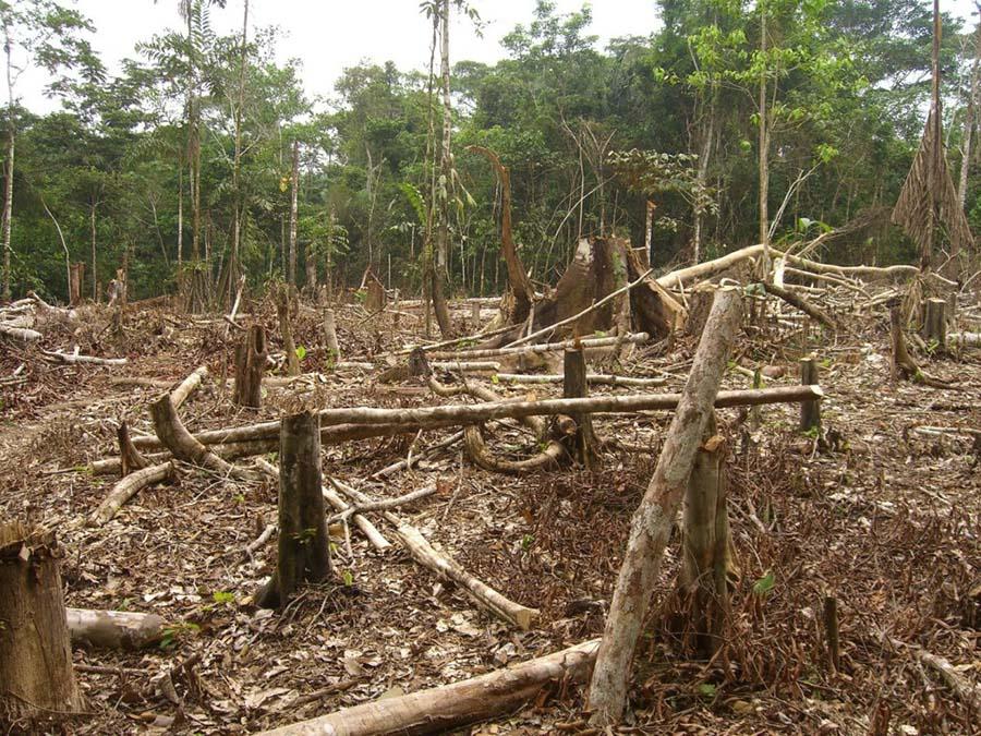 Kontrolsüz kereste kesimi Mozambik ormanlarını ormansızlaştırıyor 2