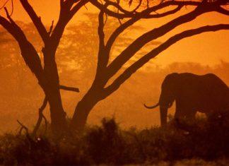 Nairobi Milli Parkı'ndaki doğal yaşam demir yolu projesi yüzünden tehdit altında