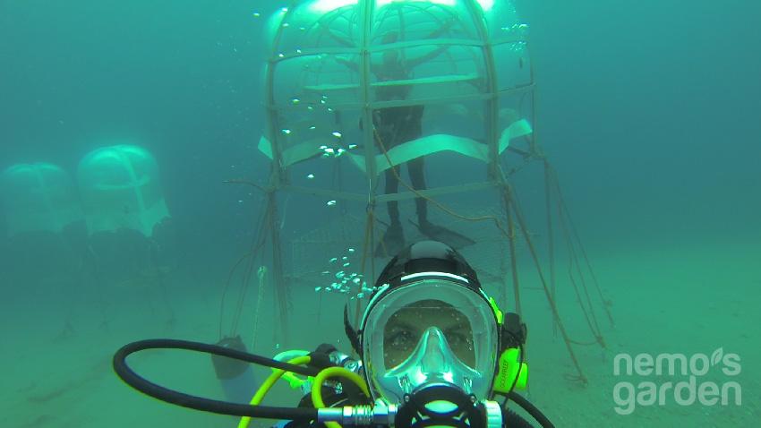 Nemo'nun Bahçesi 1