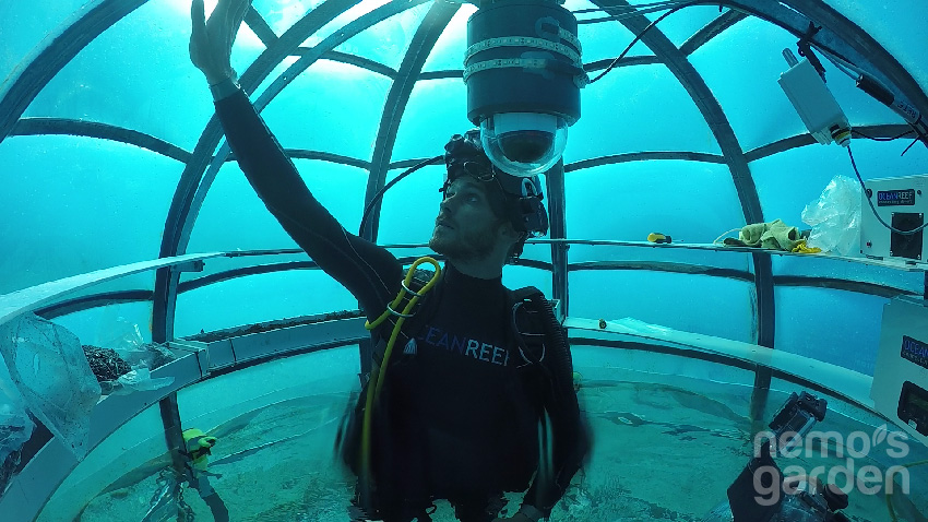 Nemo'nun Bahçesi 4
