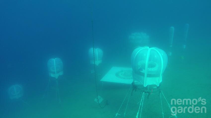 Nemo'nun Bahçesi 5