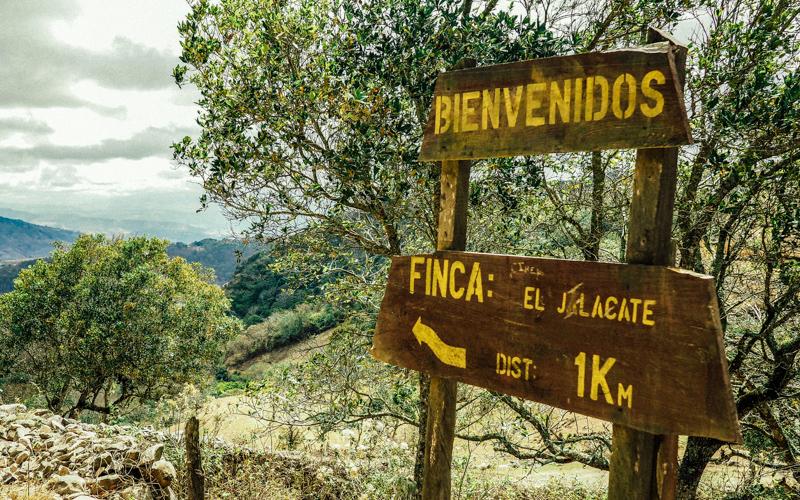 Nikaragua vadilerinde yeşile ve sanata adanan hayat Alberto Gutierrez 1