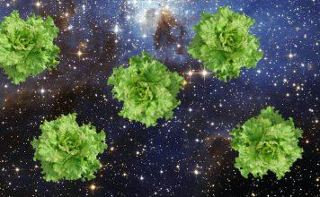 uzayda yetiştirdikleri marulları deneyecekler