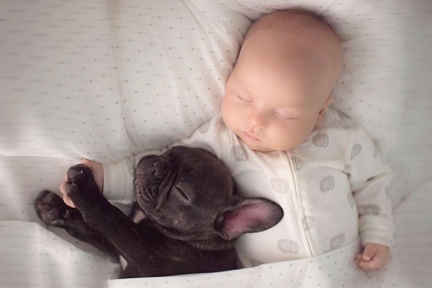 baby-dog-friendship-french-bulldog-ivette-ivens-3  Birbirlerini kardeş zanneden bebek Dilan ve yavru bulldog baby dog friendship french bulldog ivette ivens 3