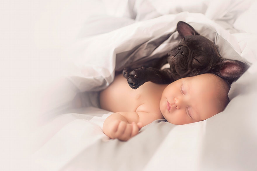 baby-dog-friendship-french-bulldog-ivette-ivens-5  Birbirlerini kardeş zanneden bebek Dilan ve yavru bulldog baby dog friendship french bulldog ivette ivens 5