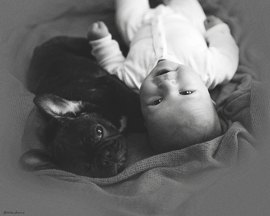 baby-dog-friendship-french-bulldog-ivette-ivens-8  Birbirlerini kardeş zanneden bebek Dilan ve yavru bulldog baby dog friendship french bulldog ivette ivens 8
