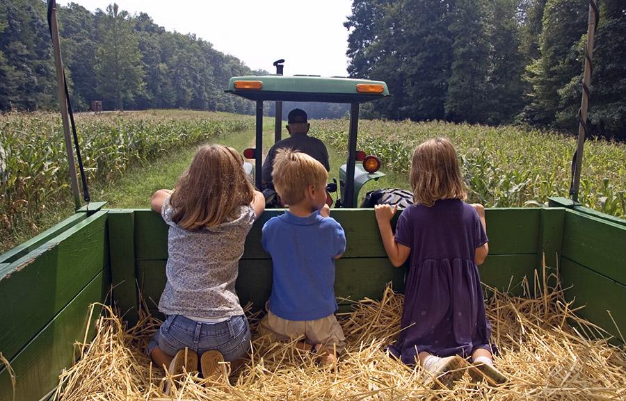 Çiftlik Çocuk 2