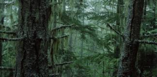 İnsanlığın gelişmeye başladığı ilk günden bu yana gezegen üzerindeki toplam ağaç sayısı neredeyse yarı yarıya düştü.