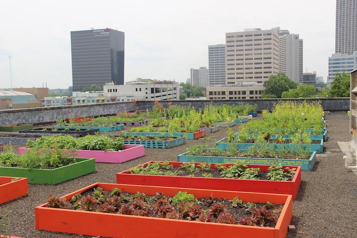 Evsizlerin sürdürülebilir yaşam için ekolojik tarım öğreniyor 4