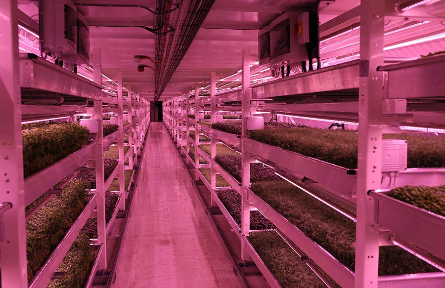 Growing Underground 3