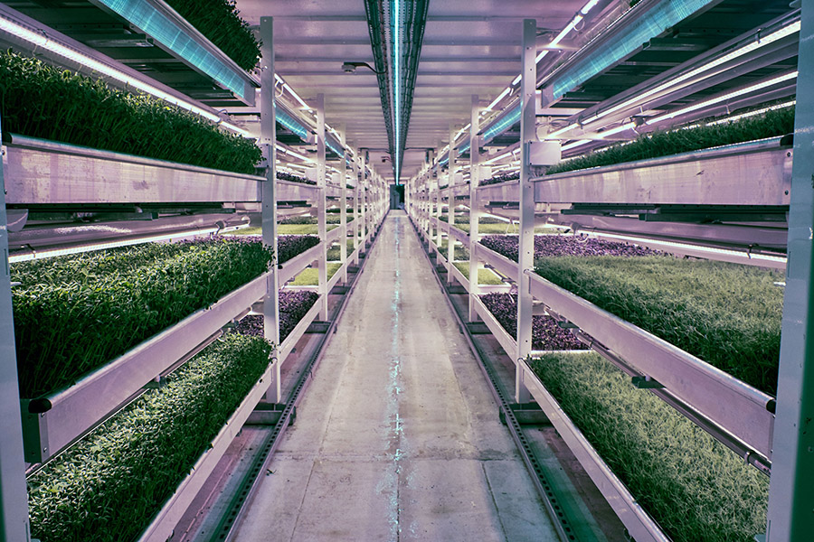 Growing Underground 5