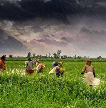 """Hindistan'daki bağımsız çiftçiler yeni bir """"Yeşil Devrim""""e hazırlanıyor"""