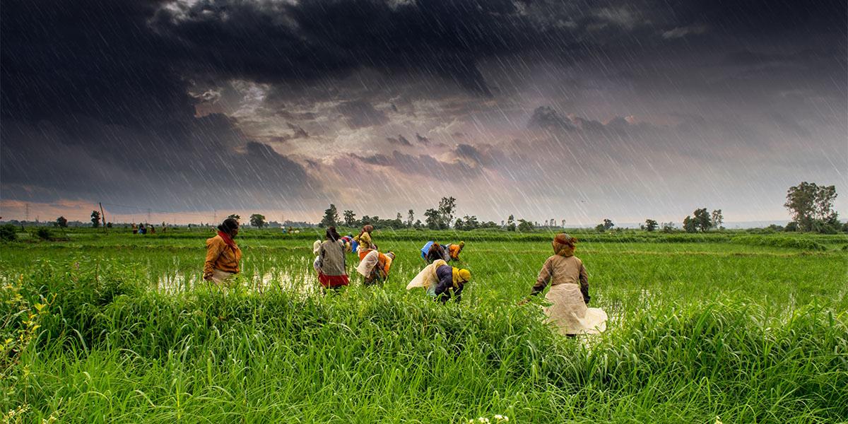 Hindistan'daki bağımsız çiftçiler yeni bir