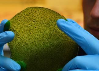 Uzaya yeşil alternatif: Fotosentez yapabilen yaprak üretildi
