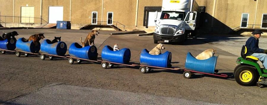 """Köpek Varili 4  Varillerden yaptığı """"Köpek Treni"""" ile terk edilmiş köpekleri gezintiye çıkarıyor K C3 B6pek Varili 4"""