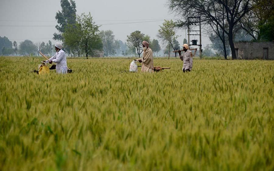 Sürdürülebilir tarım için Hindistan'da yeşeren umutlar 2