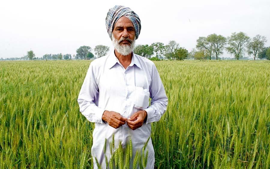 Punjab'ın Chaina köyünde organik yöntemlerle tarım yapan çiftçi Amarjit Sharma. Kaynak: Aljazeera America.
