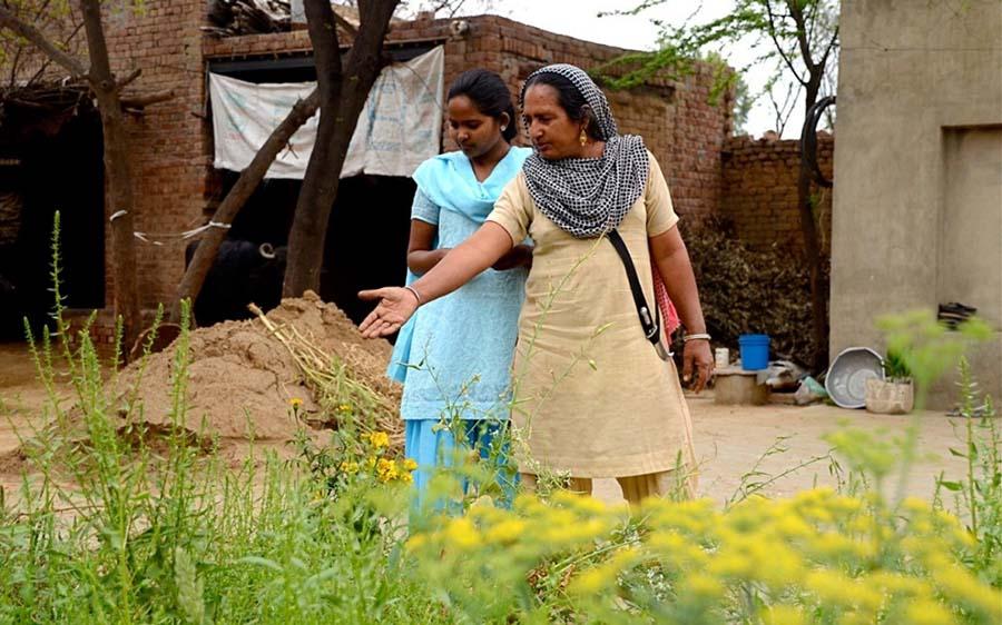 Sürdürülebilir tarım için Hindistan'da yeşeren umutlar 4
