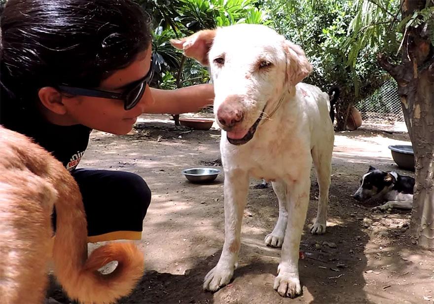 Sağlıklı Köpek 1  Neredeyse ölmek üzereyken bulunan köpeğin 2 ay içindeki inanılmaz değişimi Sa C4 9Fl C4 B1kl C4 B1 K C3 B6pek 1