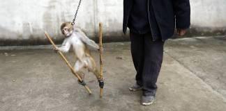 Hollanda sirklerde yabani hayvanların kullanılmasını yasakladı