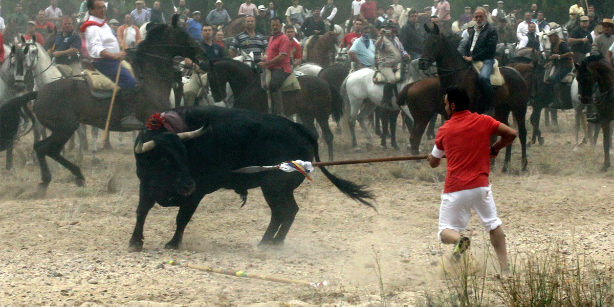 İspanya'nın en kanlı boğa etkinliği Toro de la Vega'ya karşı 100 bin kişi yürüdü
