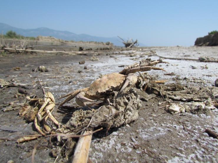 ege denizi çöp 2