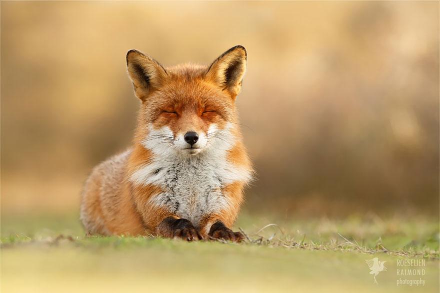 zen-foxes-12
