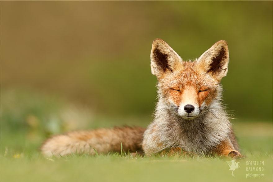 zen-foxes-3