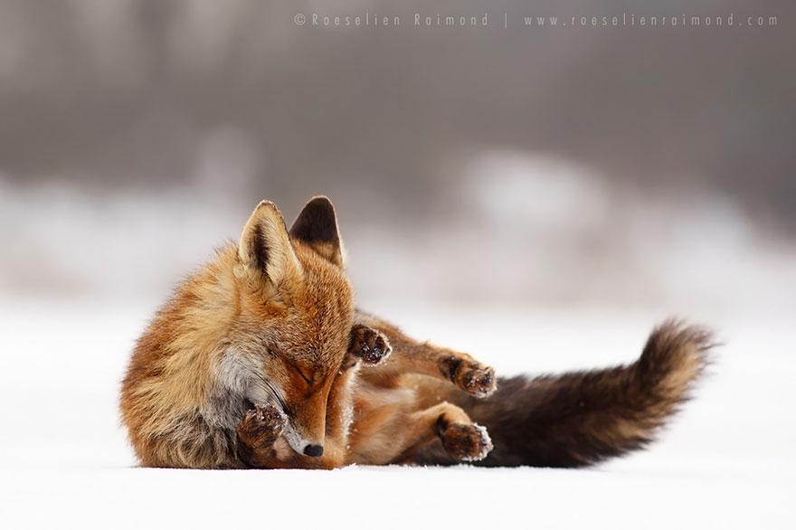 zen-foxes-4