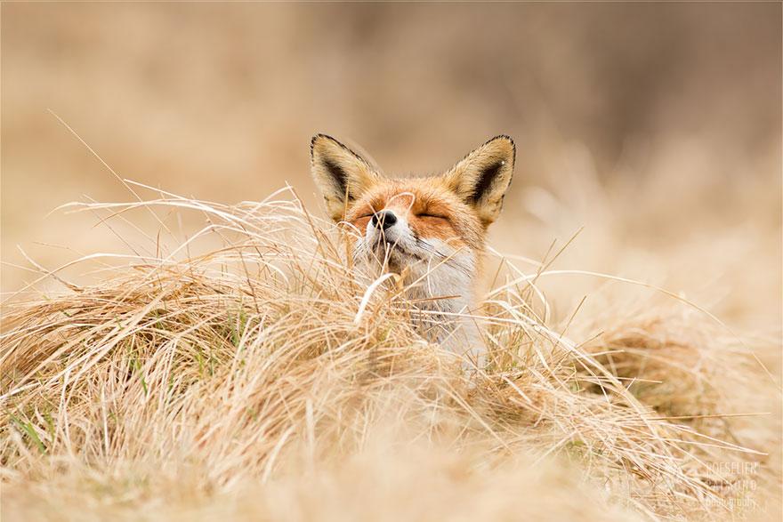 zen-foxes-6