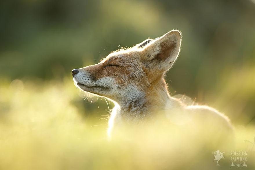zen-foxes-7_