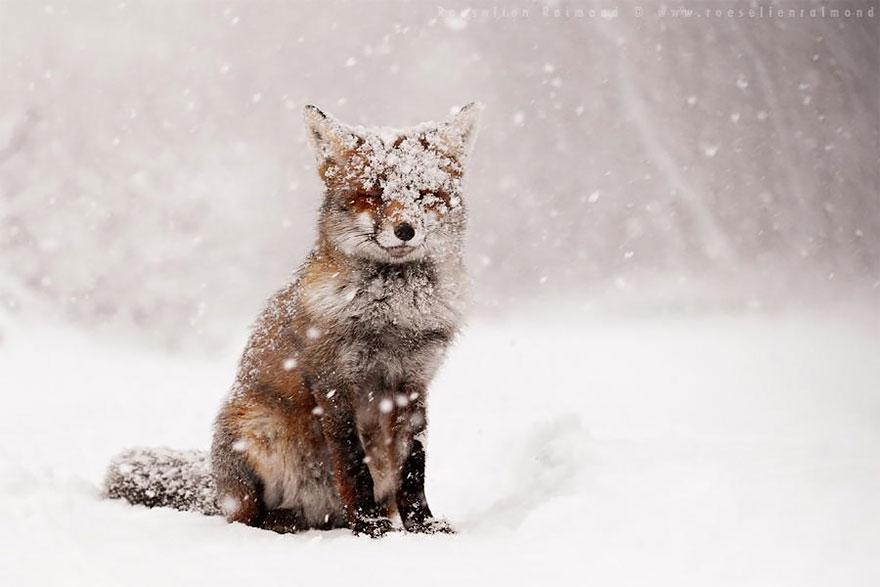 zen-foxes-roeselien-5